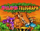 Bush Telegraph